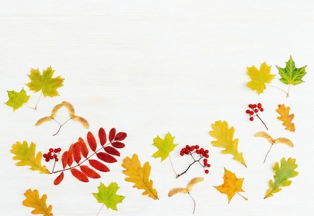 Cadre d'automne avec des feuilles de sorbier de couleur rouge et de sorbier, feuilles d'érable et de chêne sur fond en bois blanc avec espace de copie vue de dessus.