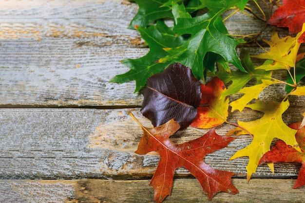Cadre d'automne pour feuilles sèches tombées jaunes, rouges, oranges, disposées à gauche du cadre sur une planche de bois