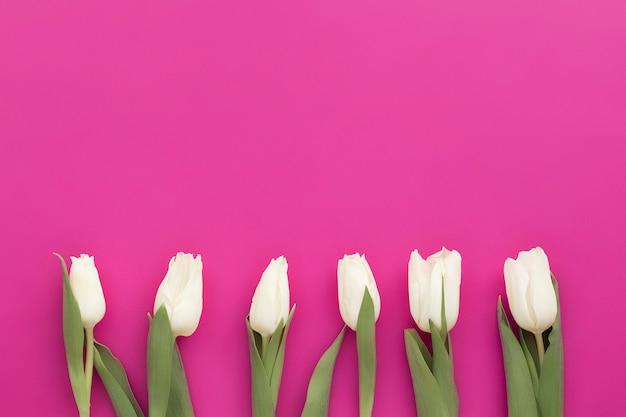 Cadre de bordure de tulipes blanches sur rose violet