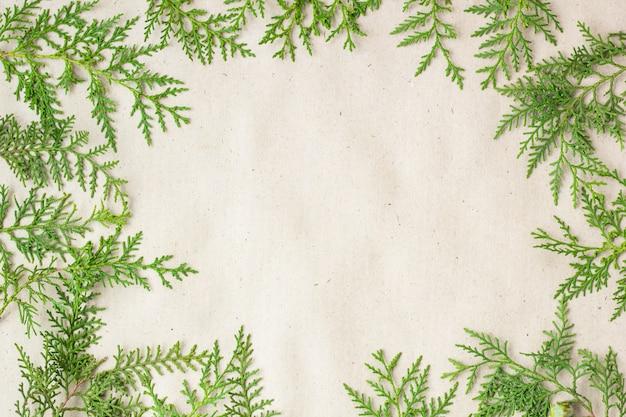 Cadre de branches de thuya vert sur fond rustique beige.