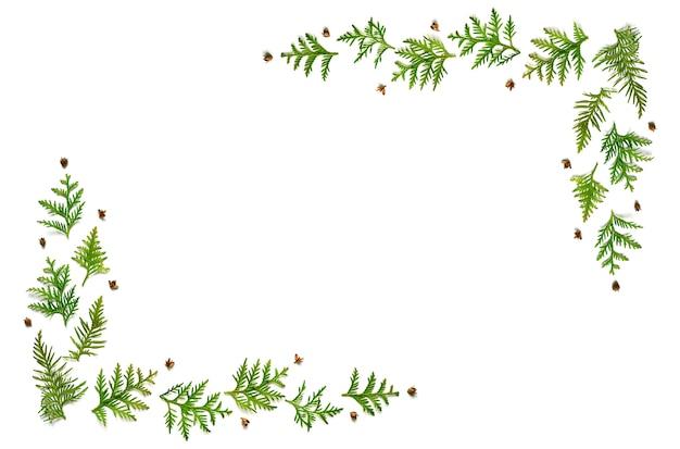 Cadre de brindilles de thuya et de minuscules cônes isolés sur fond blanc.