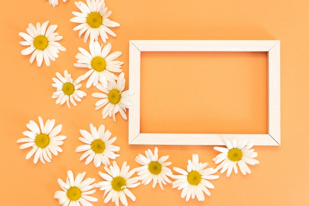 Cadre de camomille avec espace pour texte, carte postale à base de plantes florale