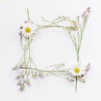 Cadre de camomille et fleurs de champ