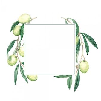 Cadre carré avec une branche d'olives vertes