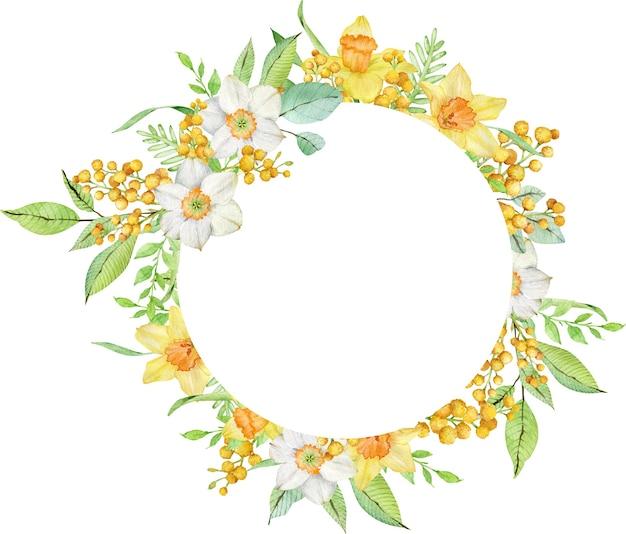 Cadre de cercle aquarelle avec jonquilles jaunes et branches de mimosa