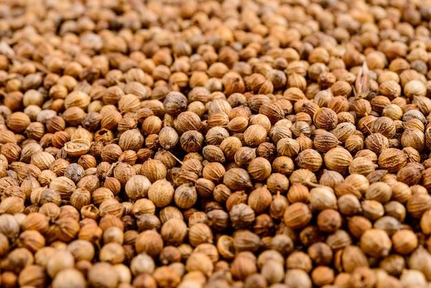 Cadre complet de graines de coriandre.