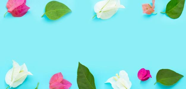 Cadre composé de belles fleurs de bougainvilliers rouges, roses et blancs sur fond bleu. espace de copie