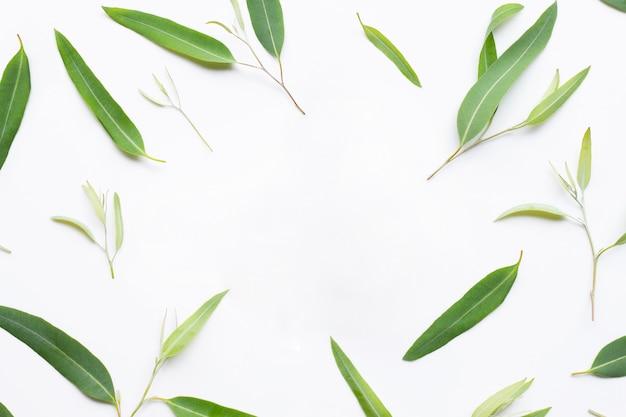 Cadre composé de feuilles d'eucalyptus sur fond blanc.