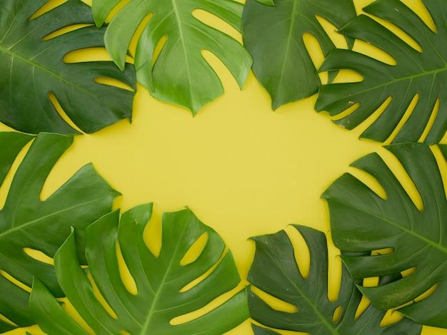 Cadre composé de feuilles tropicales vertes monstera sur fond jaune.