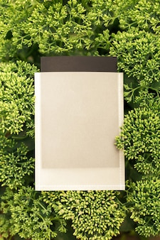 Cadre de composition de mise en page créative en buisson vert de fleur de sedium avec étui noir et blanc pour ...