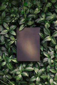 Cadre de composition de mise en page créative fait de feuilles de pervenche verte avec une belle texture avec du noir ...