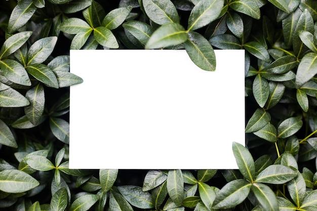 Cadre de composition de mise en page créative fait de feuilles de pervenche verte avec une belle texture avec du papier ...