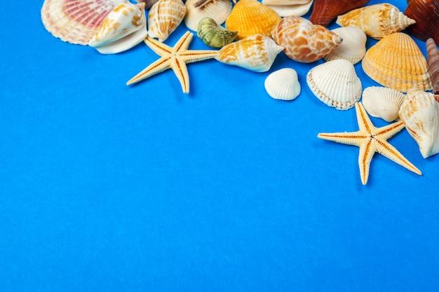 Cadre de coquillages de toutes sortes sur fond bleu.