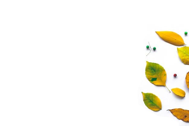 Cadre fabriqué à partir de feuilles d'automne séchées sur fond blanc.