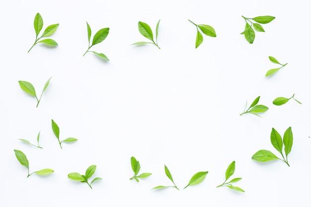 Cadre fait de feuilles d'agrumes sur fond blanc. vue de dessus