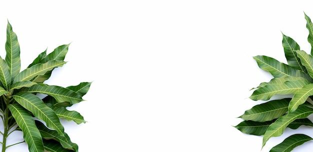 Cadre fait de feuilles de mangue sur fond blanc.