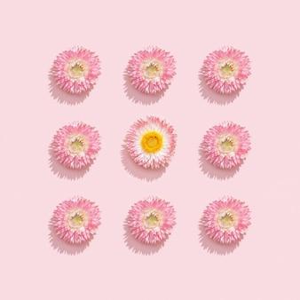 Cadre fait de fleurs séchées sur rose tendre