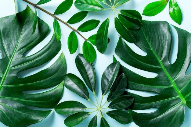 Cadre de feuille de palmier tropical sur fond bleu avec espace de copie. mise à plat. vue de dessus. concept de nature d'été ou de printemps.