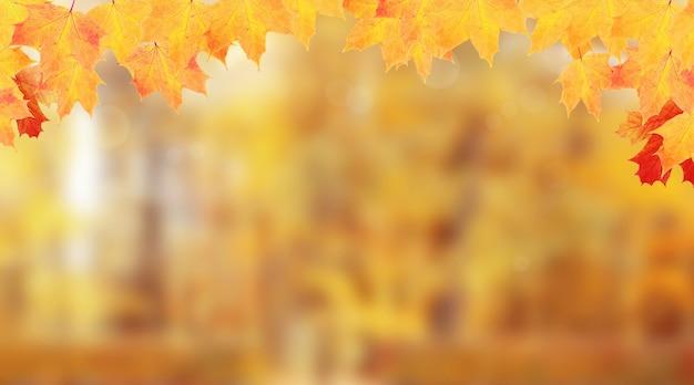 Cadre de feuilles d'érable jaune-orange de fond nature automne
