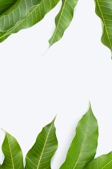 Cadre en feuilles de mangue sur fond blanc.