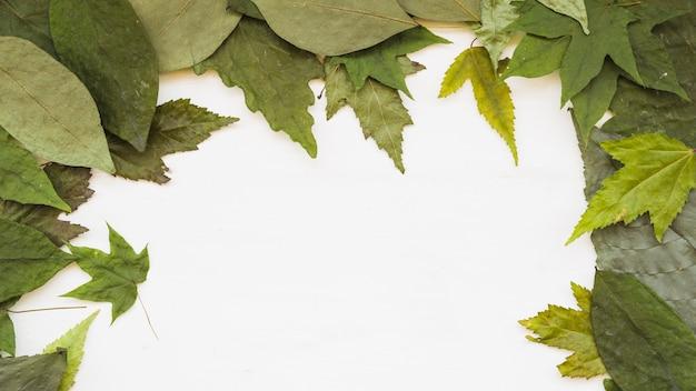 Cadre de feuilles naturelles