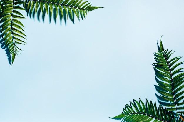 Cadre feuilles de palmier