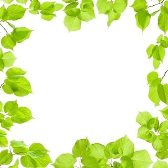 Cadre de feuilles vertes isolé sur blanc, bordure et arrière-plan