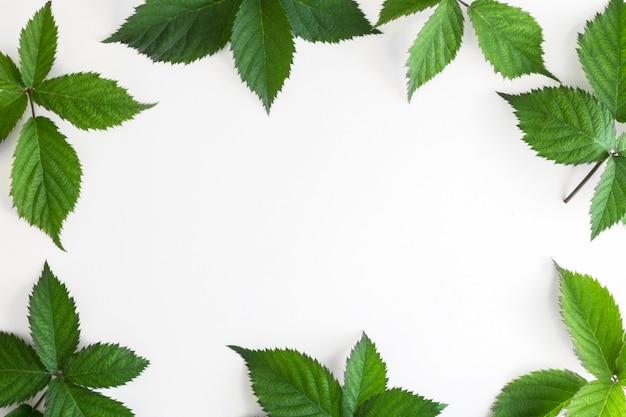 Cadre en feuilles vertes