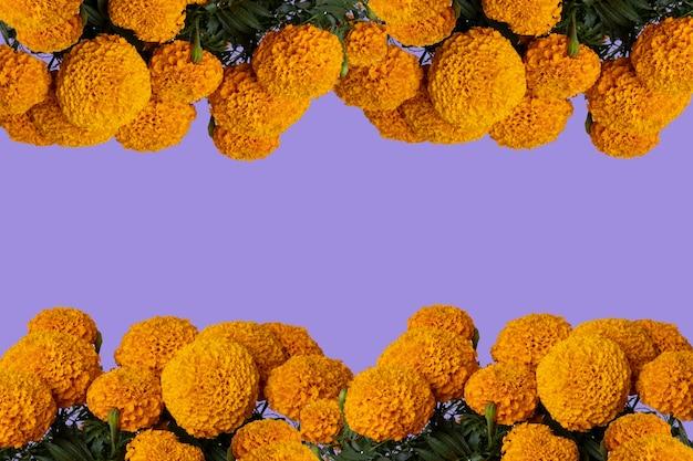 Cadre de fleur de cempasuchil avec fond coloré et espace pour le texte