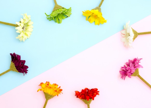 Cadre de fleurs colorées sur fond bleu et rose à plat, vue de dessus