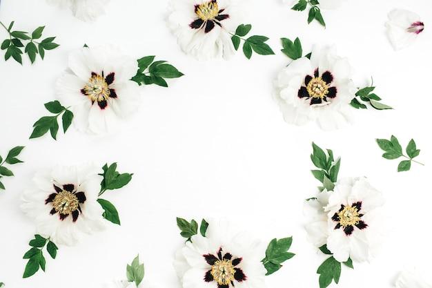Cadre de fleurs de pivoine blanche sur surface blanche