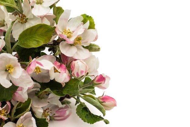 Cadre de fleurs de poire isolé sur fond blanc.