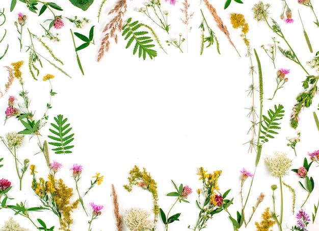 Cadre de fleurs sauvages et de feuilles sur fond blanc
