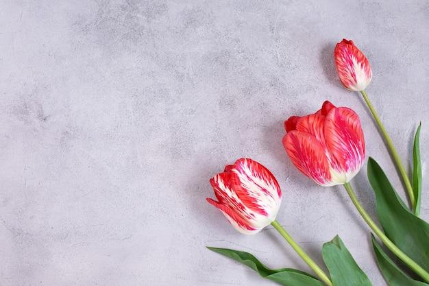 Cadre de fleurs de tulipes de couleur sur fond gris