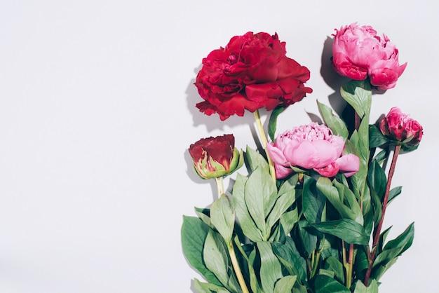 Cadre floral. pivoines roses avec des ombres dures sur fond pastel