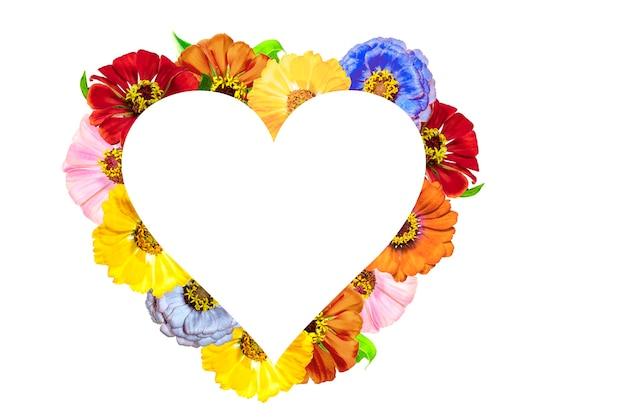 Cadre en forme de coeur fait de fleurs de zinnia sur fond blanc. la saint-valentin.