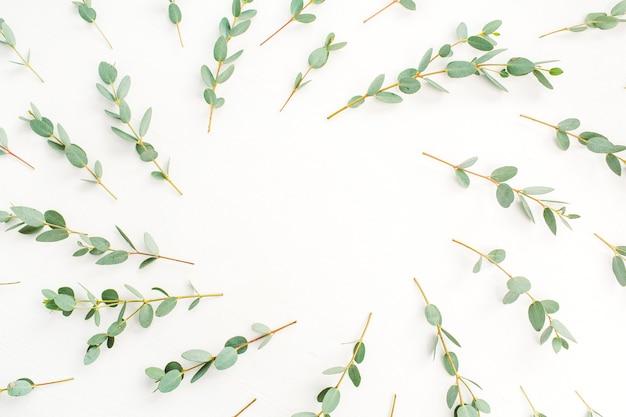 Cadre de motif de branche d'eucalyptus sur fond blanc. mise à plat, vue de dessus