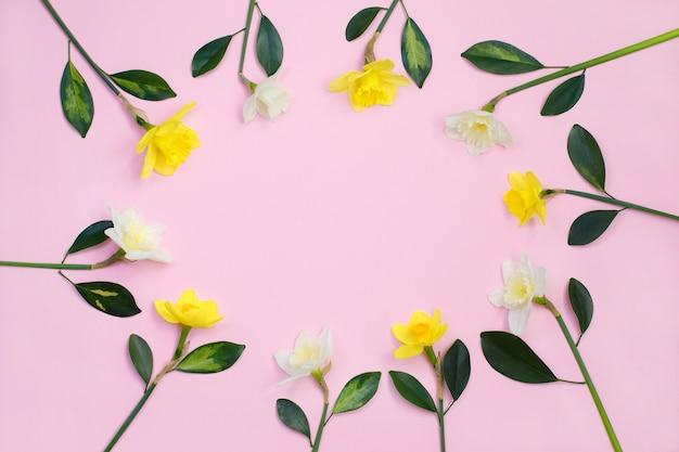Cadre, narcisse, jonquille, fleurs