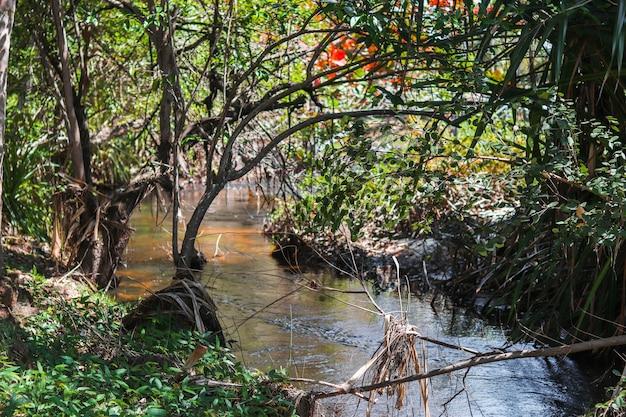 Cadre Naturel Magnifique Avec Rivière Et Végétation De Plage Dense à Itacimim, Bahia-brésil. Photo Premium
