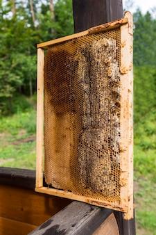 Cadre avec nids d'abeilles