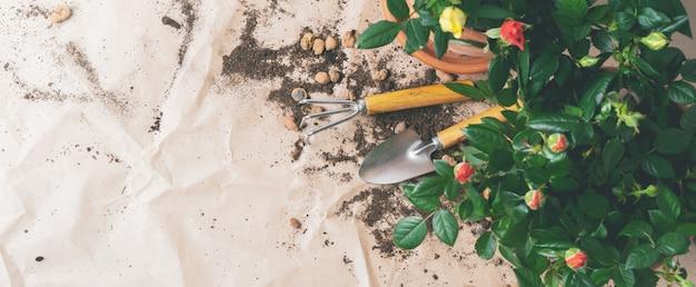 Cadre d'outils de jardinage avec mini roses dans des pots avec espace de copie. transplanter des plantes.