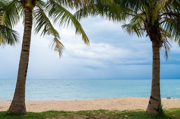 Cadre de palmiers avec plage de sable et mer