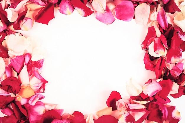 Cadre de pétales de rose sur fond blanc