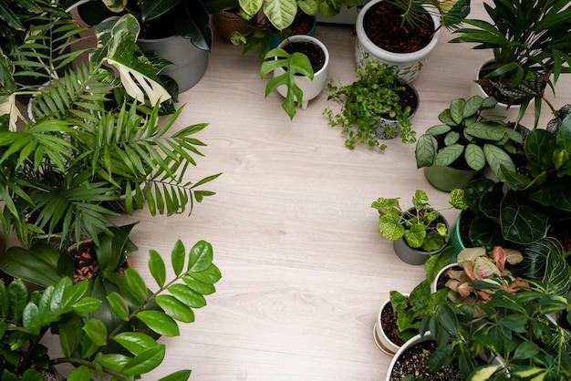 Cadre de plantes vue de dessus