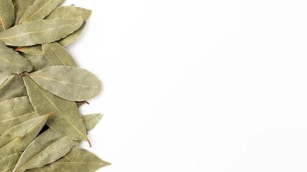 Cadre plat avec des herbes et copie-espace