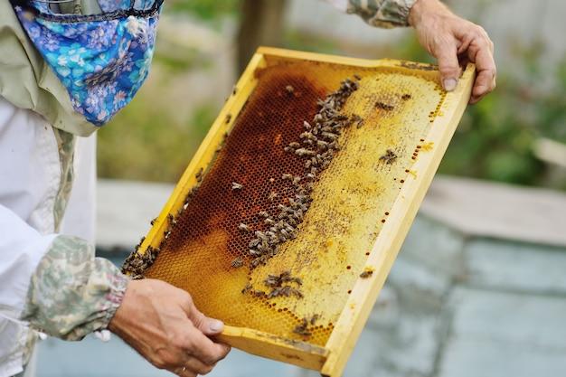 Cadre pour abeilles gros plan dans les mains d'un apiculteur à l'arrière-plan du soleil et un rucher