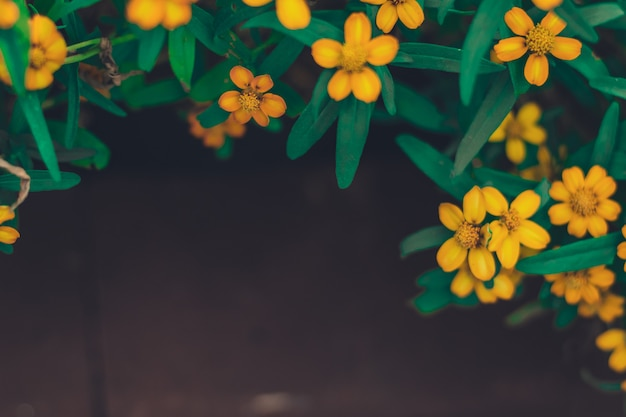 Cadre de printemps été de petites fleurs jaunes belles fond sombre espace copie