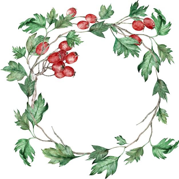 Cadre rond aquarelle dessiné à la main fait de branches d'aubépine avec des baies rouges et des feuilles vertes.