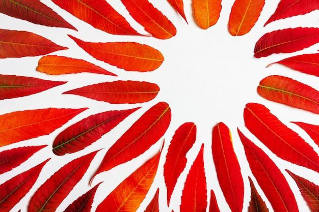 Cadre rond dans un motif de feuilles d'automne colorés
