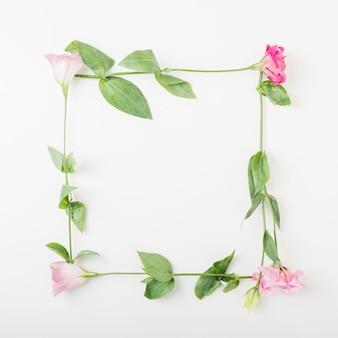 Cadre rose fleur sur fond blanc
